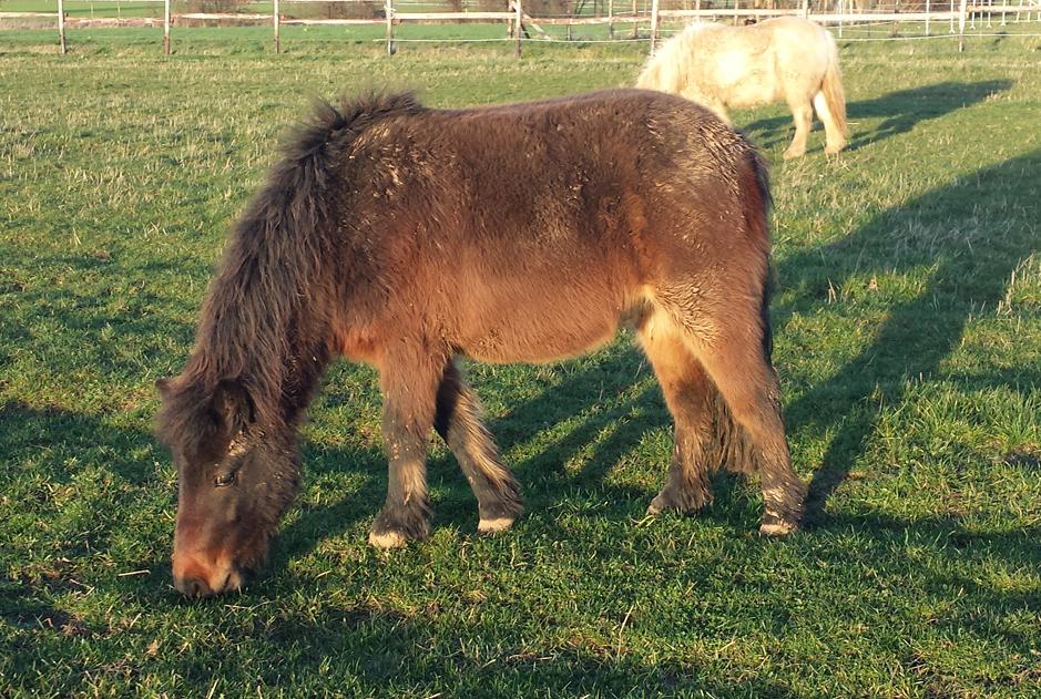 Pferd-Joko