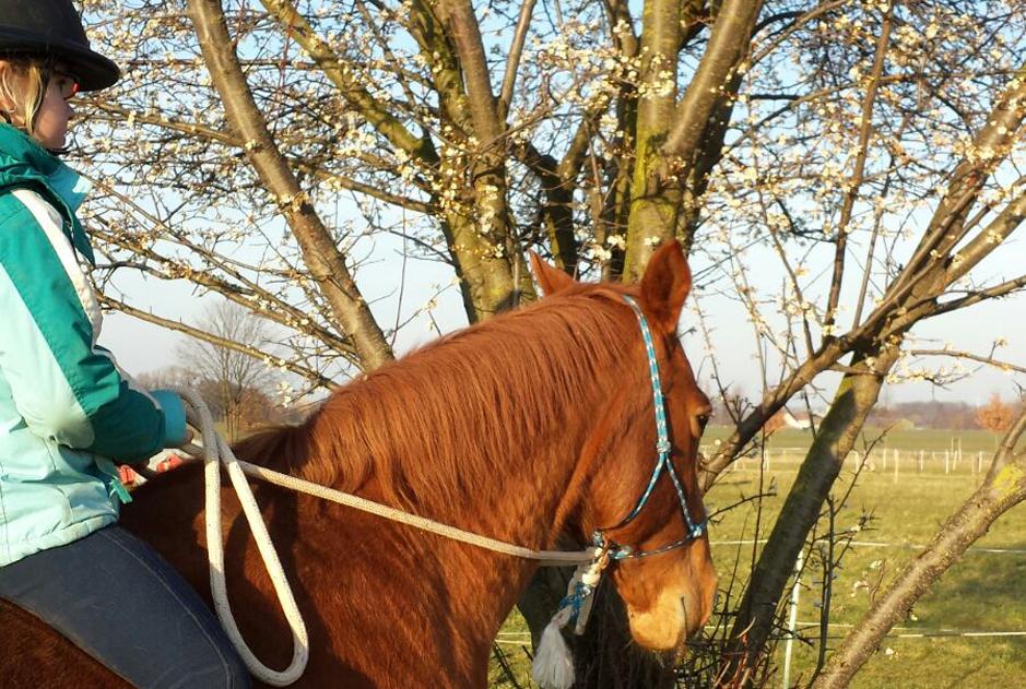 Pferd und Natur